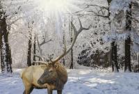 bukovelis-elnias-4503