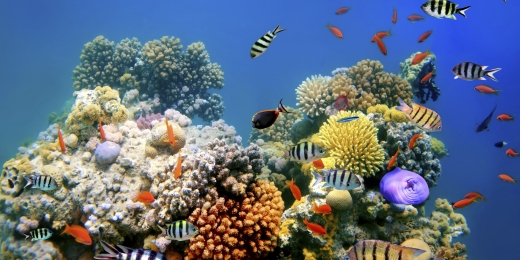 eilatas-koralai-3220