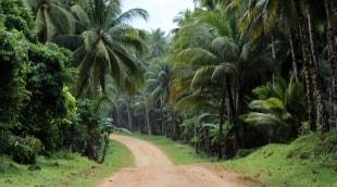 filipinai-kelias-14246