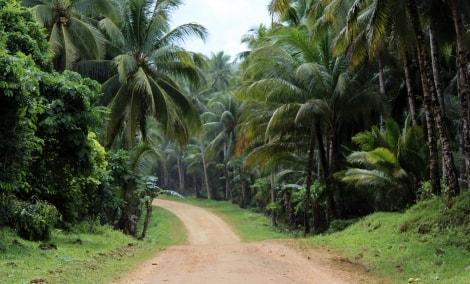 filipinai-kelias-10575