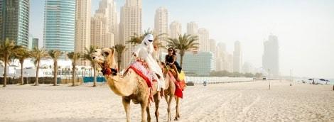dubai-camel-2653