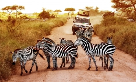 kenija-safaris-16554