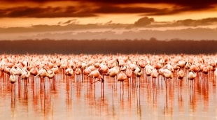 flamingai-7812