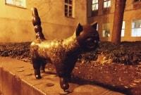 poilsis-klaipedoje-savaitgalis-katinas-8117