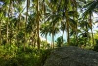koh-lipe-palmes-17700