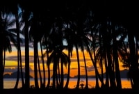filipinai-saulelydis-10529