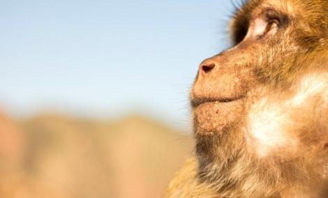 37_susimasciusi-makaka-p-girdziuso-foto-13455