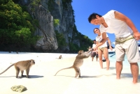 monkey-island-7039