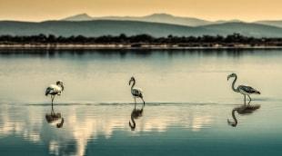 sardinija-flamingai-9656