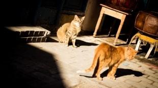 17_saviros-katinai-p-girdziuso-foto-13435