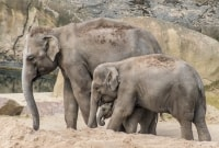 serengeti-drambliai-11539