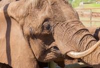 serengeti-safari-dramblys-5376