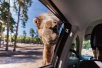 serengeti-safari-kupranugaris-5377