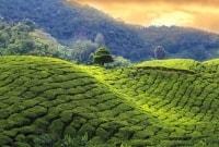 sri-lanka-arbatos-plantacijos-14260-17456