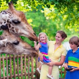 zoo-6598