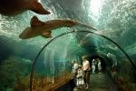 Lansarotės akvariumas - akvaparkas