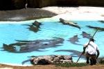 Krokodilų parkas