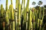 Kaktusų parkas