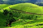 Nuvara Elija – arbatos plantacija ir gamykla