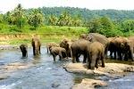 Pinavela dramblių prieglauda