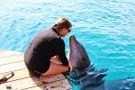 Delfinų rifas