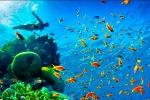 Koralinio rifo nacionalinis parkas