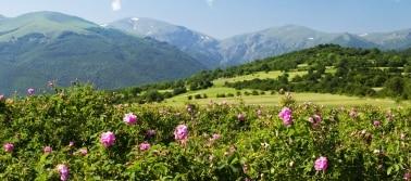 Bulgarija