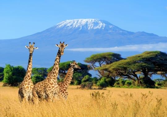 Kenija, Tanzanija ir Zanzibaras