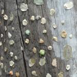 Venecija, kramtoma guma ant stulpo, Italija, Makalius