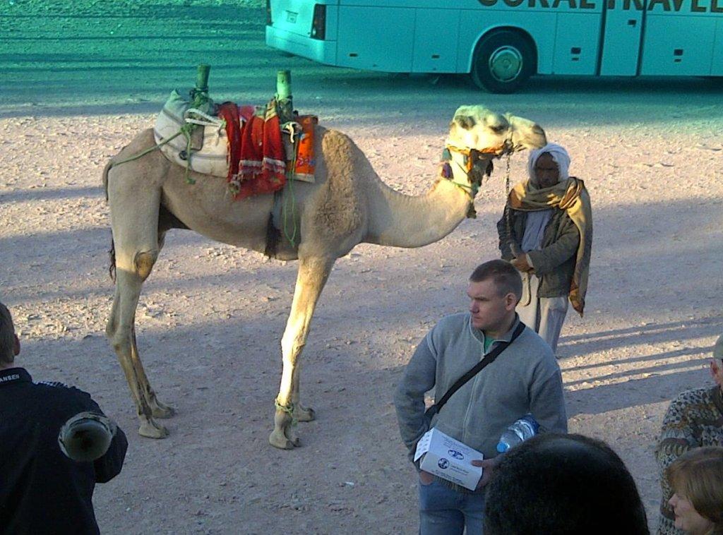makalius egipte