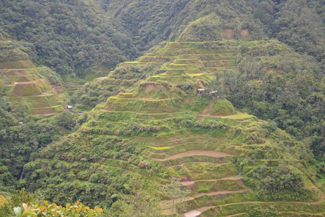 ryziu plantacijos filipinuose makalius