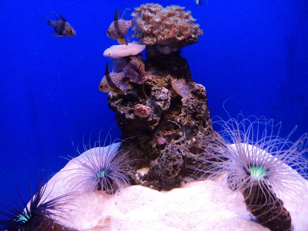 Palmos akvariume