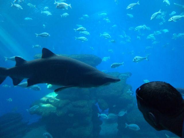 Palmos akvariume(2)
