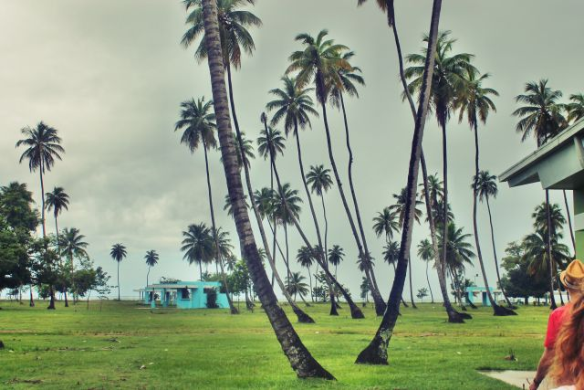 puerto rikas (10)