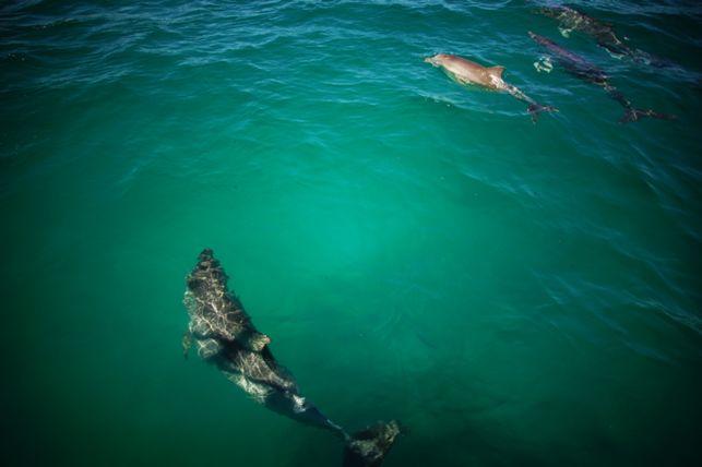 Aplink jactą nuolatos zujo delfinai