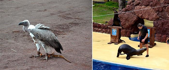 oasis-park-zoologijos-sodas-fuerteventura1
