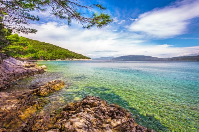 Rocky beach scenery on the banks of the Adriatic sea on the island Cres with pine tree in Croatia, Europe